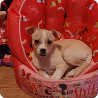Adopt A Pet :: Elena - Hanover, PA