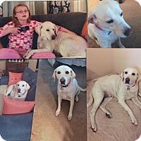 Adopt A Pet :: Kara - Albemarle, NC