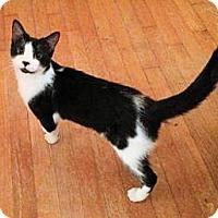 Adopt A Pet :: Stella - Morganton, NC