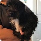 Adopt A Pet :: 6238