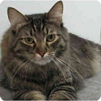 Adopt A Pet :: Fancy - Fayetteville, AR