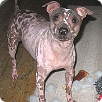 Adopt A Pet :: Oliver - Topeka, KS