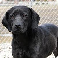 Adopt A Pet :: Victoria - Lewisville, IN