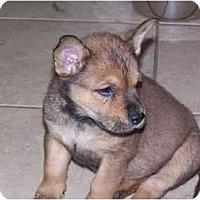 Adopt A Pet :: Alice - Cuddebackville, NY