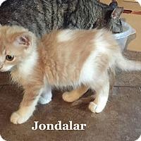 Adopt A Pet :: Jondalar - Bentonville, AR