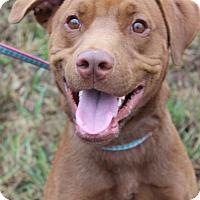 Adopt A Pet :: Sabot - Waldorf, MD