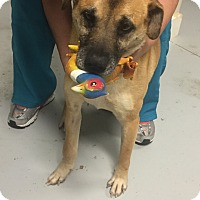 Adopt A Pet :: Maggie - Needs Surgery - Cheshire, CT
