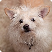 Terrier (Unknown Type, Medium) Mix Dog for adoption in Eugene, Oregon - Stevie