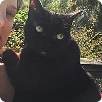 Adopt A Pet :: Leah - Novato, CA