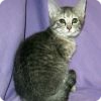Adopt A Pet :: Iris - Powell, OH