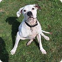 Adopt A Pet :: Chance - Lisbon, OH