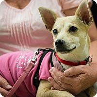 Adopt A Pet :: PIP - Grass Valley, CA