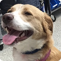 Adopt A Pet :: Gracie (has been adopted) - Southington, CT