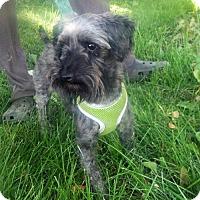 Adopt A Pet :: Cyril PENDING - Logan, UT