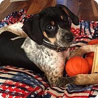 Adopt A Pet :: Nina D3286 - Shakopee, MN