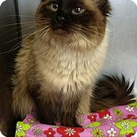 Adopt A Pet :: Nelly - Sauk Rapids, MN