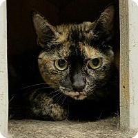 Adopt A Pet :: Scarlett - Elyria, OH