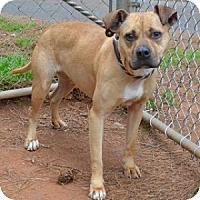 Adopt A Pet :: Tawnie - Athens, GA