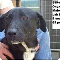 Adopt A Pet :: Onyx - FOUND BY OWNER! - Zanesville, OH