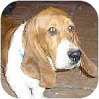 Adopt A Pet :: Baxter - Phoenix, AZ