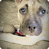 Adopt A Pet :: Honey - San Francisco, CA