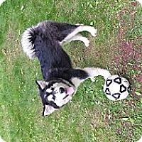 Adopt A Pet :: Rocky - Augusta County, VA