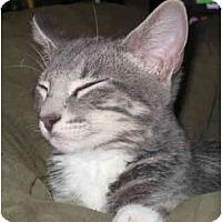 Adopt A Pet :: Mugsy - Davis, CA