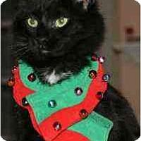 Adopt A Pet :: Dahlia - Arlington, VA