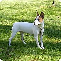 Adopt A Pet :: Izzy - Toledo, OH