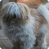 Adopt A Pet :: Cletus-before&after-MEET HIM - Norwalk, CT