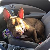 Adopt A Pet :: Vito - Tampa, FL