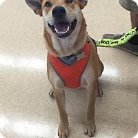Adopt A Pet :: Luna (fostered in FL) - Cranston, RI