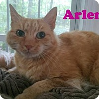 Domestic Shorthair Cat for adoption in East Stroudsburg, Pennsylvania - Arlene