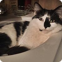 Adopt A Pet :: Kramer - Chicago, IL