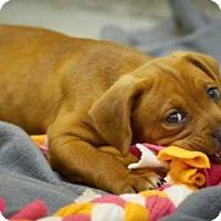 Adopt A Pet :: Cassie, Dallas, Lerory - Lincolnton, NC