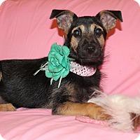 Adopt A Pet :: Ariel (has been adopted) - Buffalo, NY