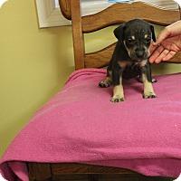 Adopt A Pet :: Jetta - Brattleboro, VT