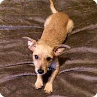 Adopt A Pet :: Harper - Littleton, CO