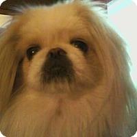 Adopt A Pet :: Stella - Warsaw, IN