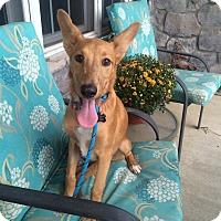 Adopt A Pet :: Tippy Boy - New Oxford, PA