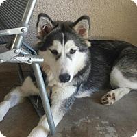 Adopt A Pet :: ANDIE - Rancho Mirage, CA