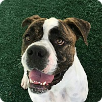 Adopt A Pet :: Grady - Chula Vista, CA