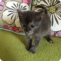 Adopt A Pet :: Brady - Garland, TX