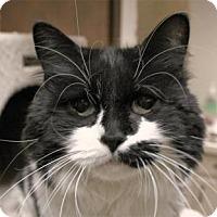 Adopt A Pet :: Daisy - Lancaster, PA