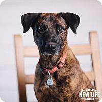Adopt A Pet :: Hazel - Portland, OR
