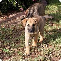 Adopt A Pet :: Katja - San Diego, CA