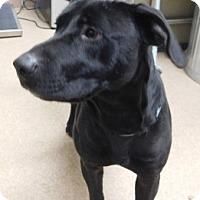 Adopt A Pet :: Merry - Saginaw, MI