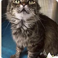Adopt A Pet :: Leah - Mansfield, TX