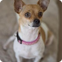 Adopt A Pet :: Louise - Lakeland, FL
