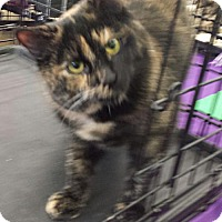 Adopt A Pet :: 7 month old Tapas - Akron, OH